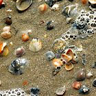 Sea Shells on the Sea Shore by designerbecky