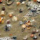 Sea Shells on the Sea Shore by designerbecky