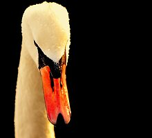 Swan Head On Black by Stan Owen