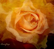 The rose    by Chris Armytage™