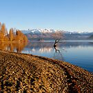 Wanaka Early Morning by chriso