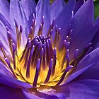 Little Purple Fingers by Ravi Chandra