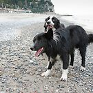 Black & White Dogs by Karen Havenaar