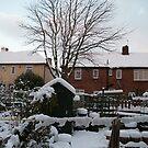 My Back Garden, November 27th 2010 by GEORGE SANDERSON