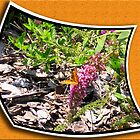 "Butterfly Bush by Edmond J. [""Skip""] O'Neill"