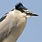 Black Crowned Night Heron by Michael  Moss