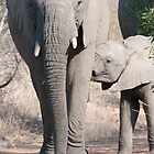 Elephant and Feeding Calf by Sara Friedman