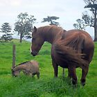 Jane Eyre and her Twin Foals by norfolk