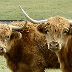 Highland Horns by Margaret Stockdale