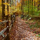 Trail to Blue Hen Falls by antonalbert1