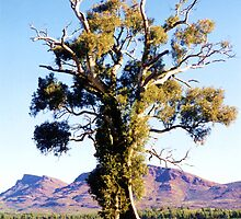 The Spirit of Endurance, The Cazneaux Tree by Michael John