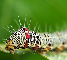 Hairy Caterpillar by SharonD