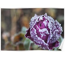 Frosty Rose Poster
