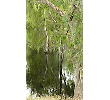 FLOODED FOREST NSW Photographic Print