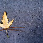 leaf and needles  by pj johnson