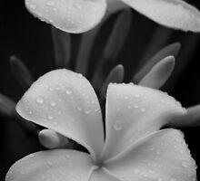 Morning Dew by Candy Gemmill