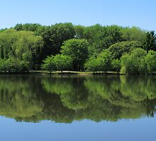 Pond Reflections by Frank Romeo