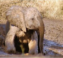 BABY ELEPHANT MUDBATH - SERIES: # UP CLOSE AND PERSONAL WITH ELPHANTS by Magaret Meintjes
