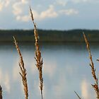 Shore Grass on ZedEn Lake by MaeBelle