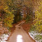 Snowy lane by Mike  Waldron