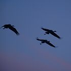 Three Sand cranes by the57man