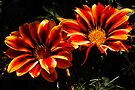 sunny autumn duo by dedmanshootn