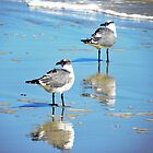 Mirrored Seagulls by designerbecky