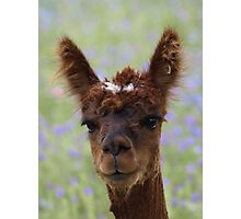 One Weird Pacca. Photographic Print
