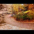 Change of Seasons by Kozology