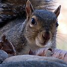 Nosy Squirrel by Jean Gregory  Evans
