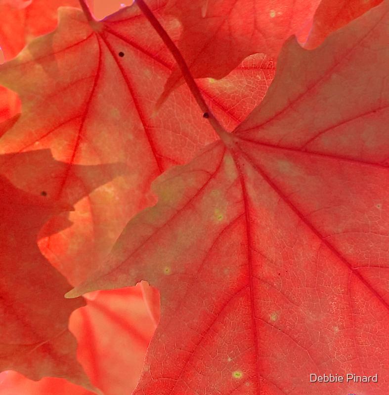 Red Maple Leaves - Dunrobin Ontario by Debbie Pinard