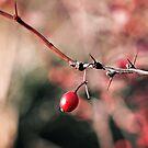 a berry by Angel Warda