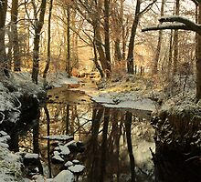 Winter in the woods. by Fred Taylor