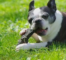 I Love My Chew Toy by Karen Checca