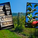 Carver Apple Orchard by Phillip M. Burrow