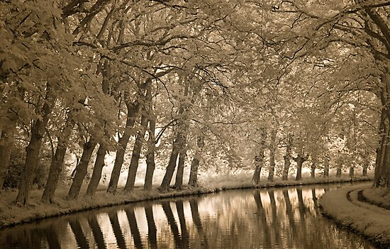Bend in the Canal  by Rene Hales