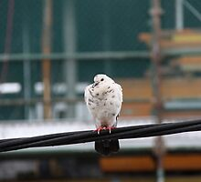 Bird on a Wire by littlebiggphoto