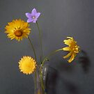 Indoor Sunshine...Wildflowers by Meg Hart