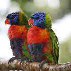 True Mates in the Rainforest by aussiebushstick