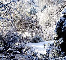 Snow scene by Barry Burke