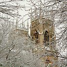 The Minster Through Snow Covered Trees by Mat Robinson