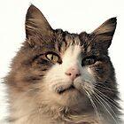 Wanlockhead Cat by simpsonvisuals