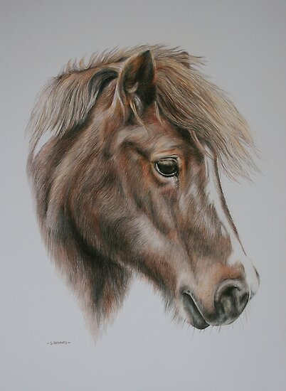 Sheila the Shetland Pony by Stephanie Greaves