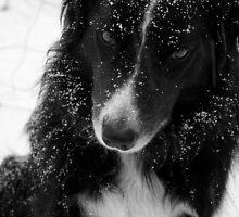 Arthur in the snow by AbsintheFairy