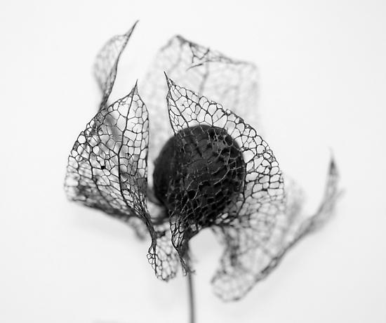Protection ~ Seedhead  - JUSTART © by JUSTART