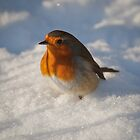 Robin Macro 3 by Gareth Jones