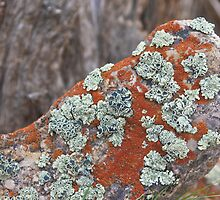 Lichen and Rock by John Butler