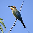 Look To The Sky ... Rainbow Bee-eater by Kerryn Ryan, Mosaic Avenues