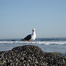 Muscle Bound Gull by Ed Hamlin
