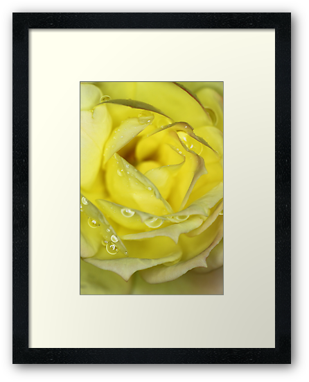 Rose in Yellow by yolanda